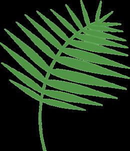 Passion Sunday Palm Branch